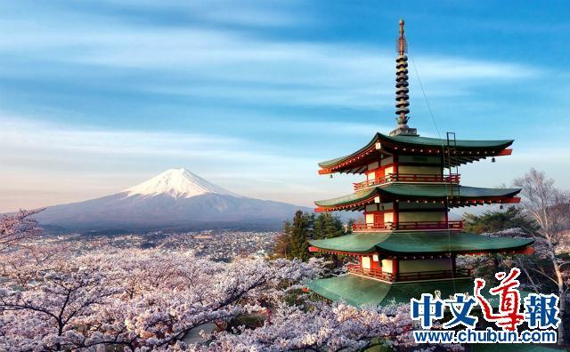 春风十里 樱花季漫过日本列岛